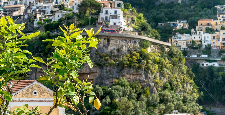 Lemon tree on Amalfi Coast