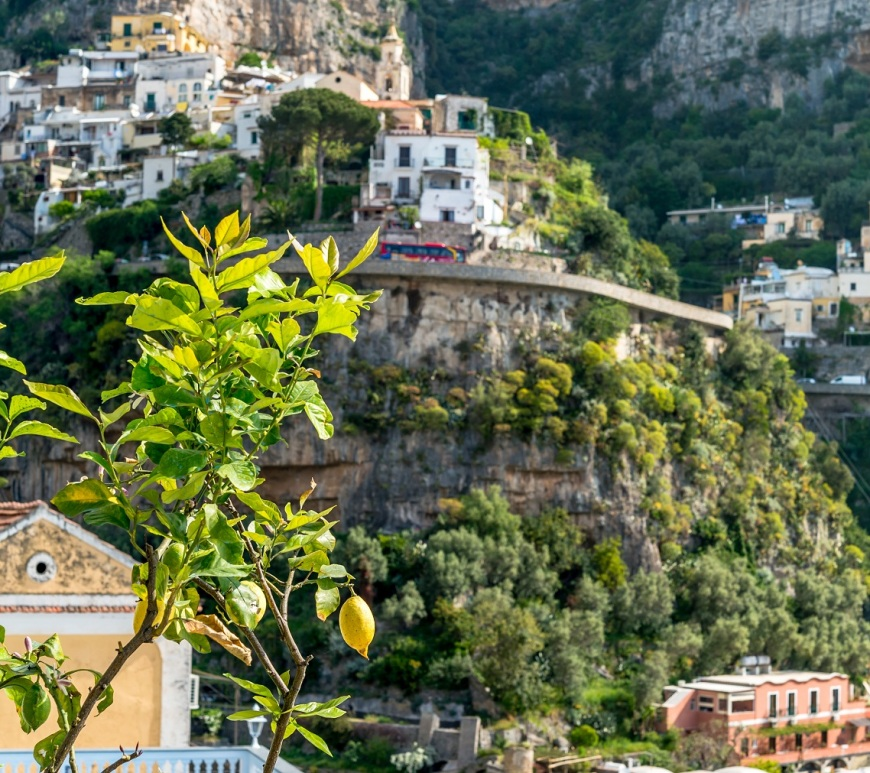 Lemon tree on Amalfi Coast