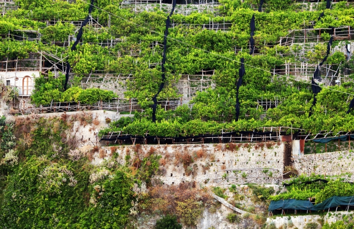 Terraced lemon gardens on the Amalfi Coast